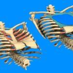 Pektus Ekskavatum (Kunduracı Göğsü) ve Pektus Karinatum (Güvercin Göğsü) Düzeltme Ameliyatı